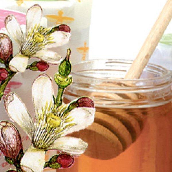 Katz Citrus Honey